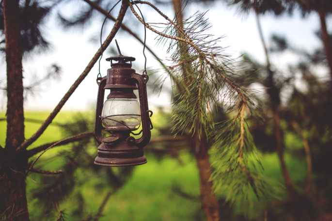 light-nature-vintage-tree.jpg