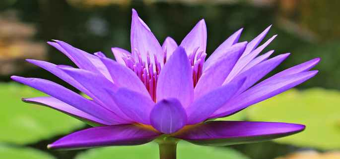 water-lily-nuphar-lutea-aquatic-plant-blossom-158284.jpeg