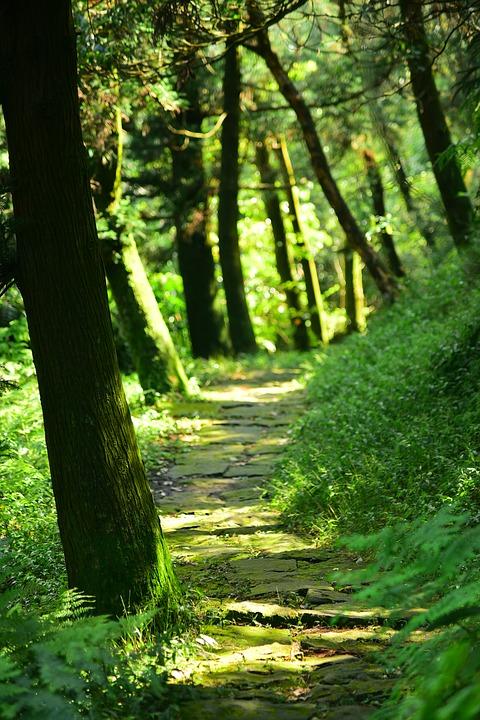 woods-3791836_960_720